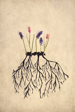 Kelly Sillaste ROOTS GROWING FROM FLOWERS Flowers