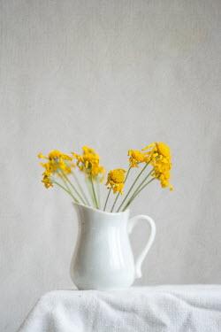 Jill Ferry YELLOW FLOWERS IN WHITE JUG Flowers
