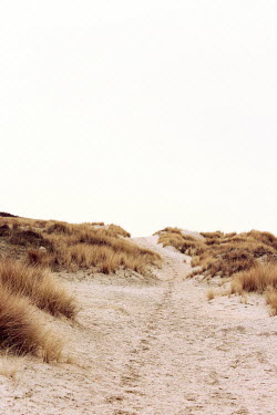 Nicole Wustrack FOOTPATH THROUGH EMPTY SAND DUNES Seascapes/Beaches