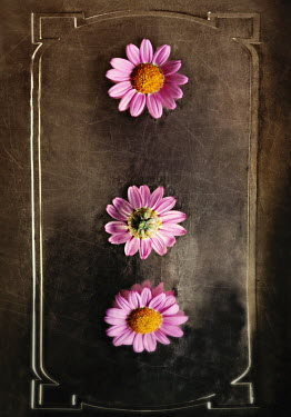Lyn Randle PINK FLOWERS ON BOOK COVER Flowers