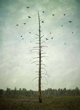 Jude McConkey BIRDS FLYING BY TALL WINTRY TREE Trees/Forest