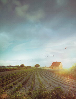 Drunaa Farm house and crops in countryside Houses