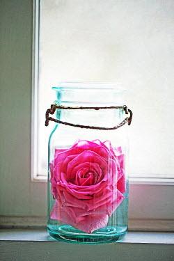 Alison Archinuk BRIGHT PINK FLOWER INSIDE GLASS JAR Flowers