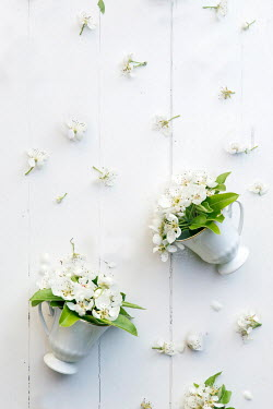 Galya Ivanova WHITE FLOWERS IN KNOCKED OVER TEA CUPS Flowers