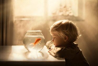 Sveta Butko LITTLE BOY WITH GOLDFISH IN SUNLIT ROOM Children