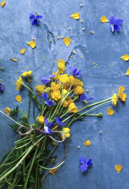 Jean Ladzinski BLUE AND YELLOW FLOWERS TIED WITH STRING Flowers