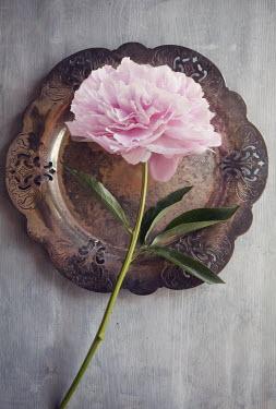 Isabelle Lafrance PINK FLOWER ON TARNISHED METAL PLATE Flowers