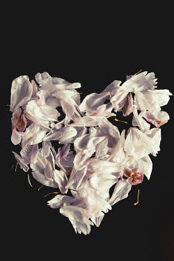 Isabelle Lafrance WITHERED FLOWER PETALS IN HEART SHAPE Flowers