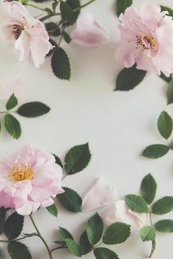 Isabelle Lafrance BORDER OF PINK FLOWERS AND LEAVES Flowers