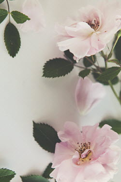 Isabelle Lafrance PASTEL PINK FLOWERS AND LEAVES Flowers