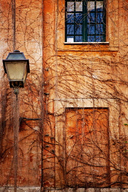 Irene Suchocki VINES GROWING OVER HOUSE AND STREET LAMP Houses