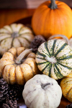 Jean Ladzinski PUMPKINS, SQUASHES AND PINECONES Miscellaneous Objects