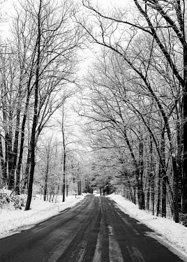 Jean Ladzinski ROAD THROUGH SNOW COVERED TREES See All Transport/Traveling