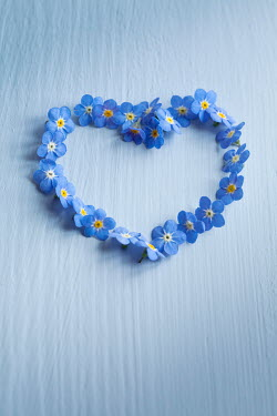 Jan Bickerton FORGET ME NOT FLOWERS IN HEART SHAPE Flowers