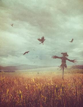 Drunaa Scarecrow in corn field Lakes/Rivers