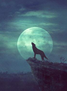 Drunaa wolf howling at full moon Animals