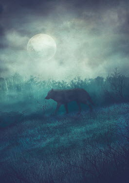 Drunaa Wolf in moonlit woods Animals