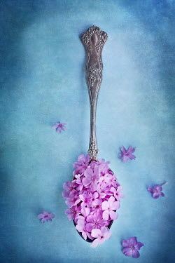 Stephanie Frey pink flowers on antique spoon Flowers