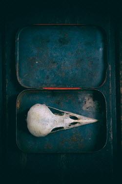 Lee Avison BIRD SKULL IN OLD TIN BOX Miscellaneous Objects