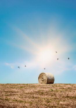 Evelina Kremsdorf hay bale in summer field Fields