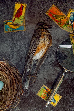 Isabelle Lafrance DEAD BROWN BIRD, MAGNIFYING GLASS AND STAMPS Birds