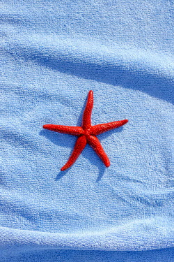 Aida Redzepagic RED STARFISH ON BLUE TOWEL Miscellaneous Objects
