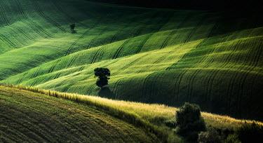 Evelina Kremsdorf Val d'Orcia. San Quirico d'Orcia, Tuscany, Italy. Fields