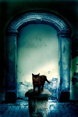Valentino Sani BLACK CAT BY STONE ARCHWAY Animals