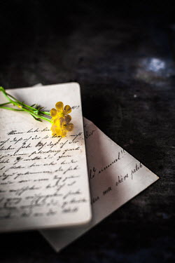 Des Panteva YELLOW FLOWERS ON LETTER ON TABLE Flowers