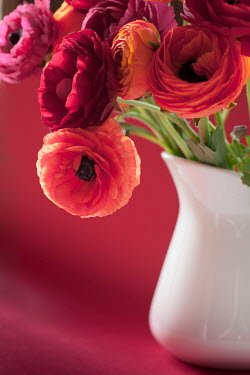 Jan Bickerton WHITE VASE WITH RANUNCULUS FLOWERS Flowers