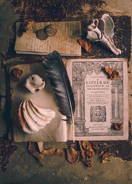 Jane Morley HISTORICAL BOOK, FEATHER AND SHELLS Miscellaneous Objects