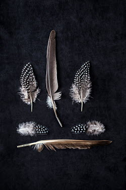 Kelly Sillaste COLLECTION OF SIX PATTERNED FEATHERS Miscellaneous Objects