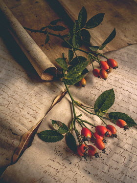 Jane Morley ROSEHIP BERRIES ON HANDWRITTEN LETTERS Miscellaneous Objects