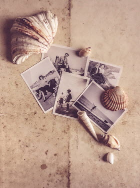 Jane Morley VINTAGE PHOTOGRAPHS AND SEA SHELLS Miscellaneous Objects