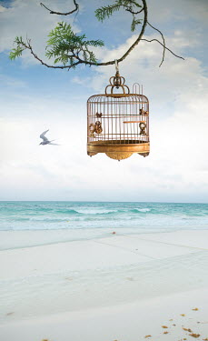 Terry Bidgood BIRD CAGE HANGING BY SANDY BEACH Seascapes/Beaches