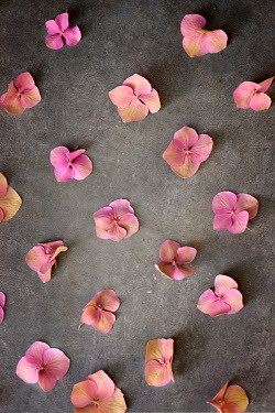 Galya Ivanova GROUP OF SCATTERED PINK FLOWERS Flowers