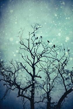 Irene Lamprakou SILHOUETTE OF BIRDS ON TREE IN WINTER Birds