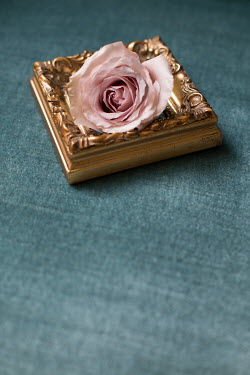 Holly Leedham PINK FLOWER ON GOLD PICTURE FRAME Flowers