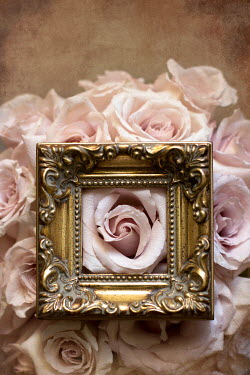 Holly Leedham PINK FLOWERS UNDER GOLD PICTURE FRAME Flowers