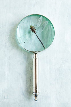 Isabelle Lafrance GREEN DRAGONFLY UNDER MAGNIFYING GLASS Insects