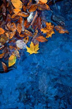 Jean Ladzinski AUTUMN LEAVES IN BLUE WATER Flowers/Plants