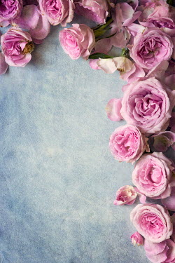 Galya Ivanova BORDER OF PASTEL PINK FLOWERS Flowers