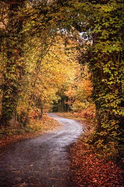 Evelina Kremsdorf path through autumn trees Paths/Tracks