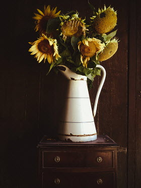 Jane Morley SUNFLOWERS IN JUG ON CHEST OF DRAWERS Flowers