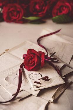 Jane Morley RED ROSE ON HANDWRITTEN LETTERS Flowers