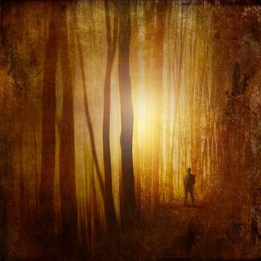 Dirk Wustenhagen SILHOUETTE OF MAN STANDING IN FOREST AT SUNSET Men