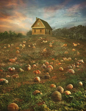Drunaa FARMHOUSE WITH PUMPKIN FIELD AT DUSK Fields