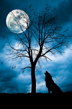 Valentino Sani WOLF HOWLING AT MOON BY TREE Animals