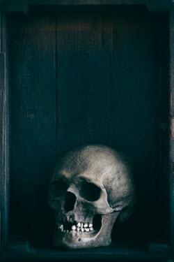 Lee Avison human skull Miscellaneous Objects
