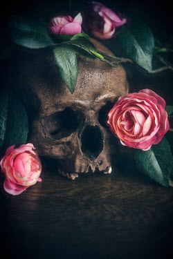 Lee Avison human skull and pink flowers Miscellaneous Objects